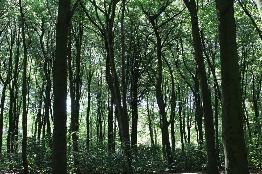 bos Eskrabouw